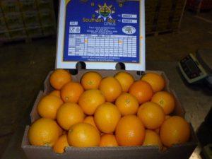 Orangen Valencias FTI1