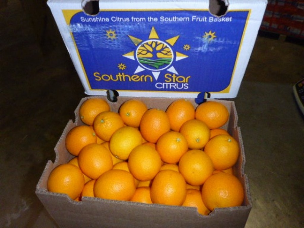 Orangen Valencias FTI2